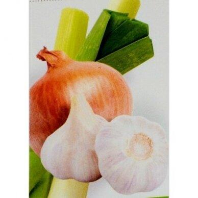 Garlic Allium Complex, Garlic and Onion Supplement Neolife